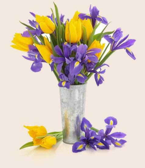 iris-fiori